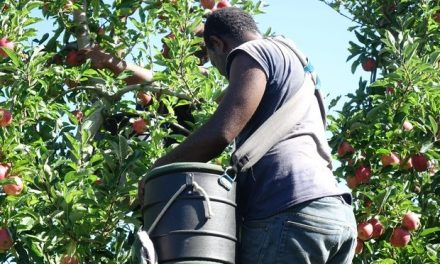 Black Birding and the Modern Day Slavery of Seasonal Workers