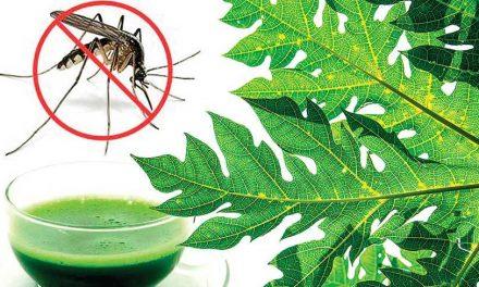 Pawpaw (Papaya) Juice Remedy for Dengue Fever