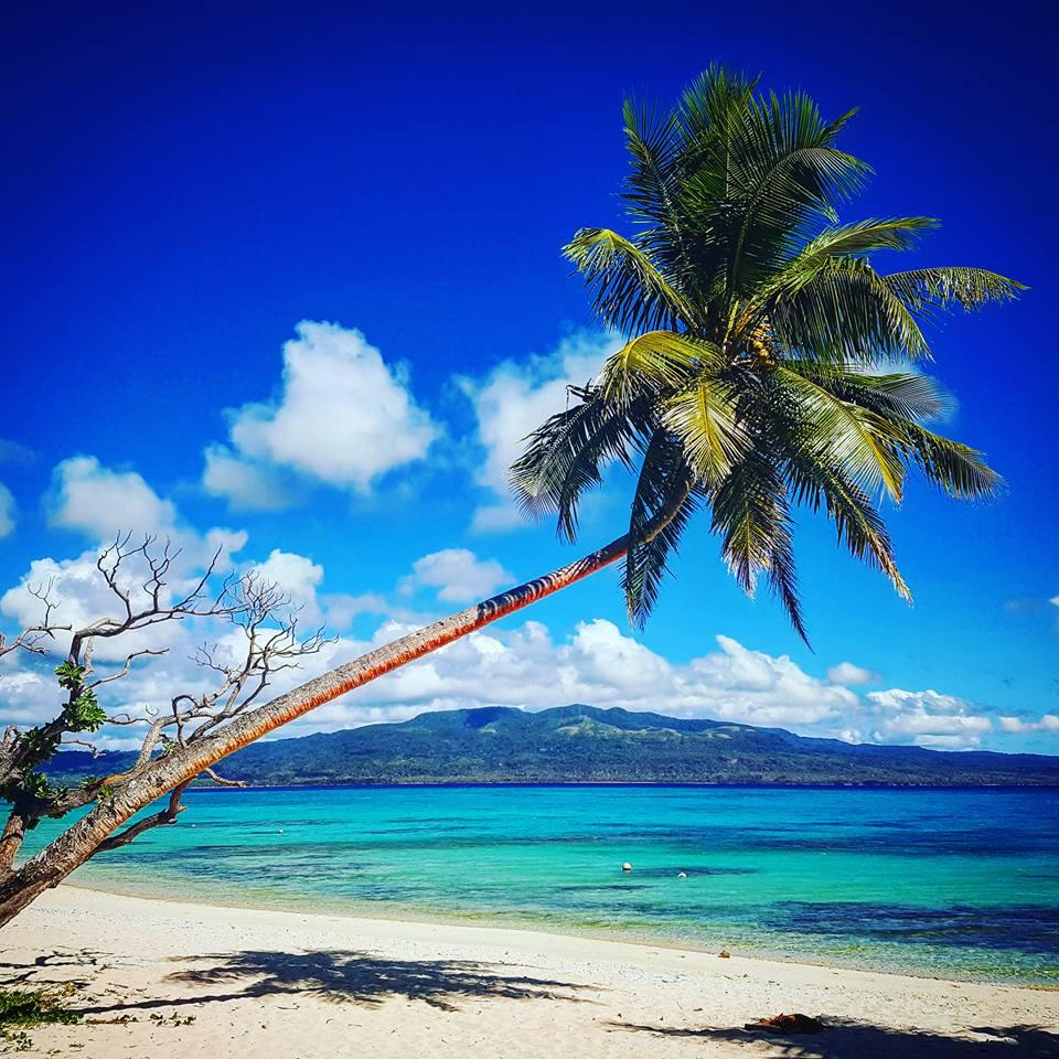 coconut tree vanuatu - Sam Proctor Photography
