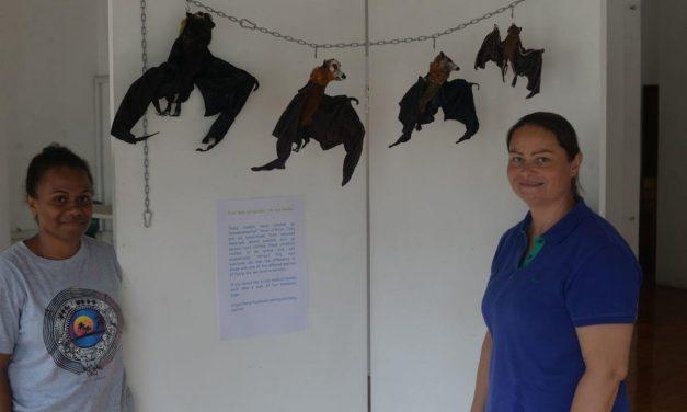 Bats of Vanuatu Exhibition