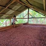 Young female cocoa farmer aims high